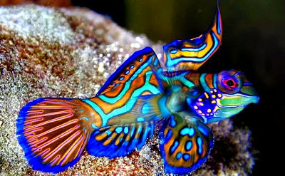 10 Jenis Ikan Hias Air Laut Yang Cantik Dan Unik Manandshark